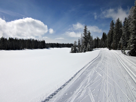 Cross country ski trails on the Grand Mesa.