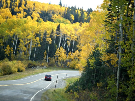 Fall colors on the Grand Mesa.