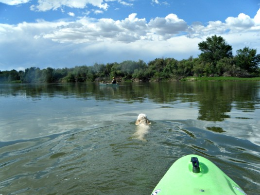 Following my dog down the Colorado River, which was formerly the Grand River. It starts high in the Rockies at Grand Lake.